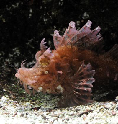 Aquarium de Nancy