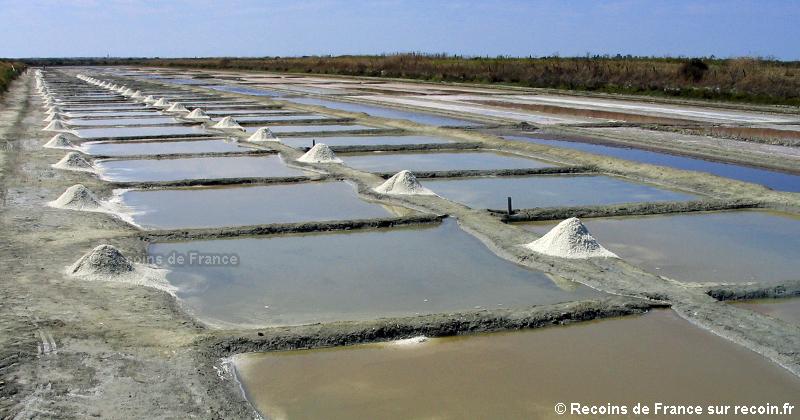 Marais salants de Loix en Ré