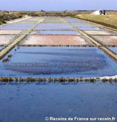 Marais salants de Loix en R�