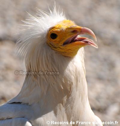 Belvedere des vautours