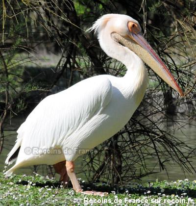 Marais aux Oiseaux d'Oléron