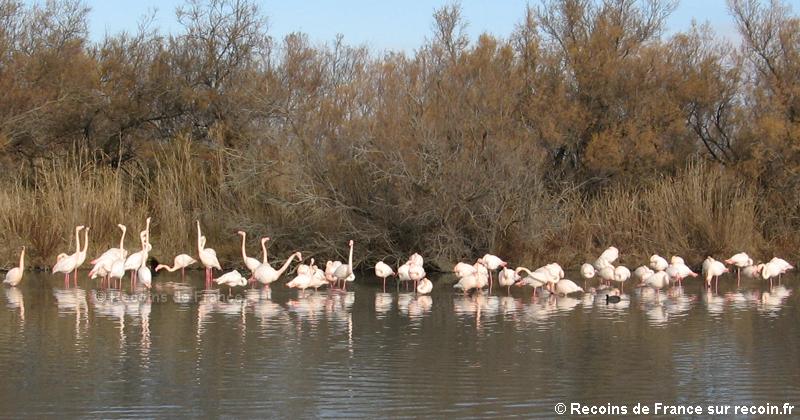 Parc ornithologique de Camargue