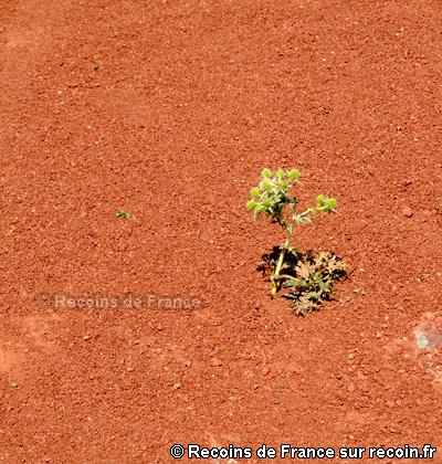 Rougier de Camarès