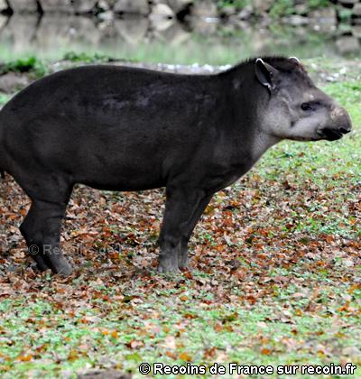 Parc animalier de l'Auxois