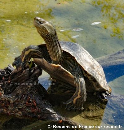 Vallée des tortues