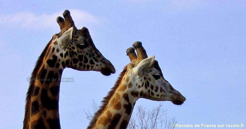 Zoo d'Amn�ville