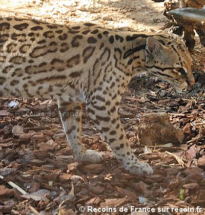 Zoo Bandol Sanary