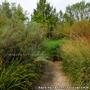 Jardin Remarquable de Gélaucourt