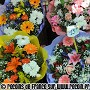 March� aux fleurs de Nice